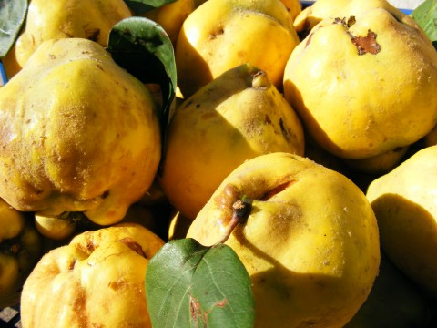 Quinces Public Domain Photos