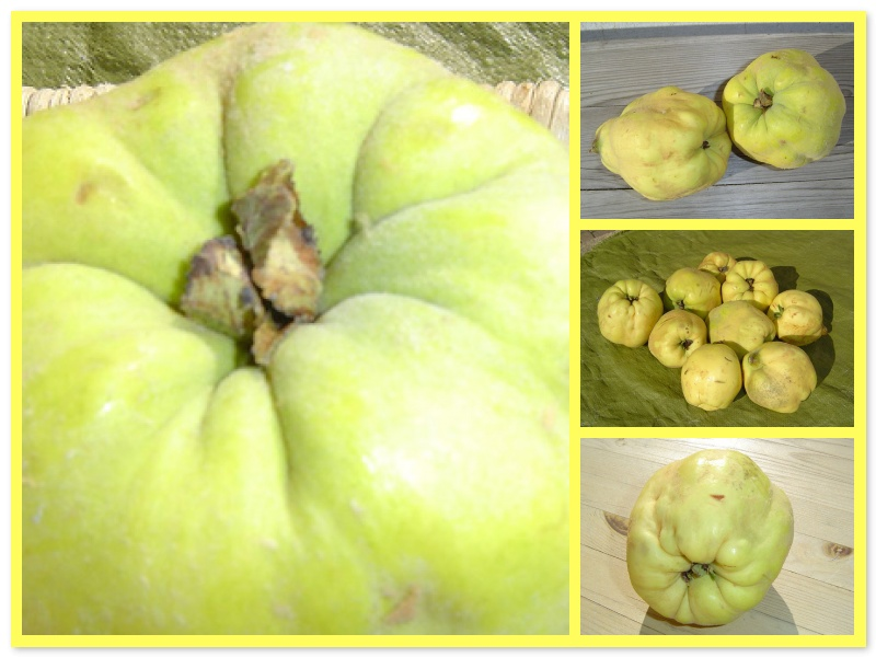 quinces from Jespahjoy